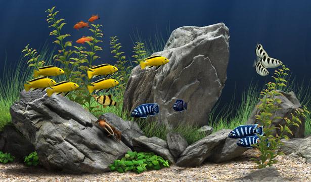 Dream Aquarium  v 1.097
